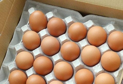 お取り寄せした新鮮卵はスーパーのとは別物だった!