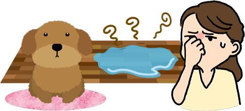 室内犬の尿が臭い・・・