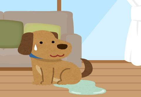 フローリングの上で排尿・・・老犬になってトイレの失敗が多くなってきた・・・
