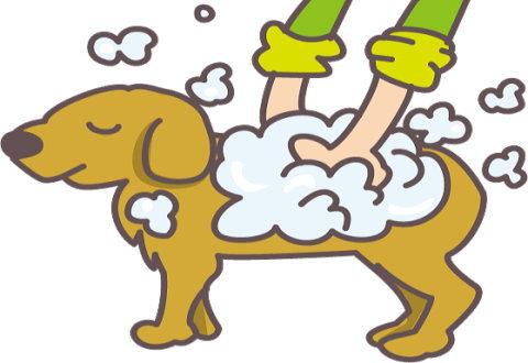 定期的にシャンプーして清潔には愛犬の臭い対策の基本ですね!